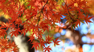 Fall leaves in bright oranges, reds, and yellows.